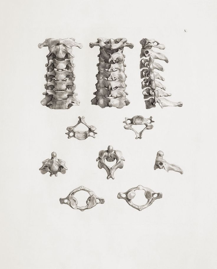 43 best the human spine images on pinterest, Skeleton