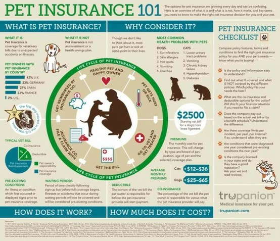 Pet Insurance 101 indemnity insurance