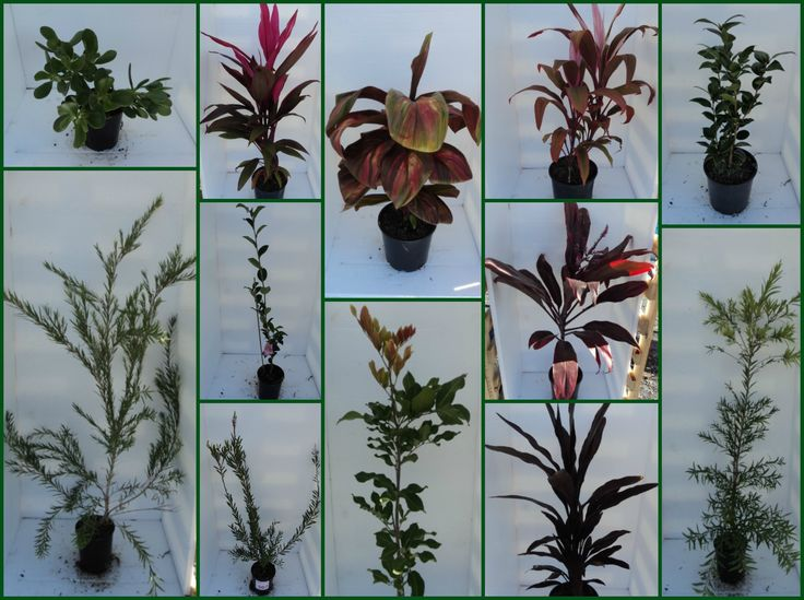 EOFY PLANT CLEARANCE Established plants ready tp be planted for the weekend!  CLICK HERE: