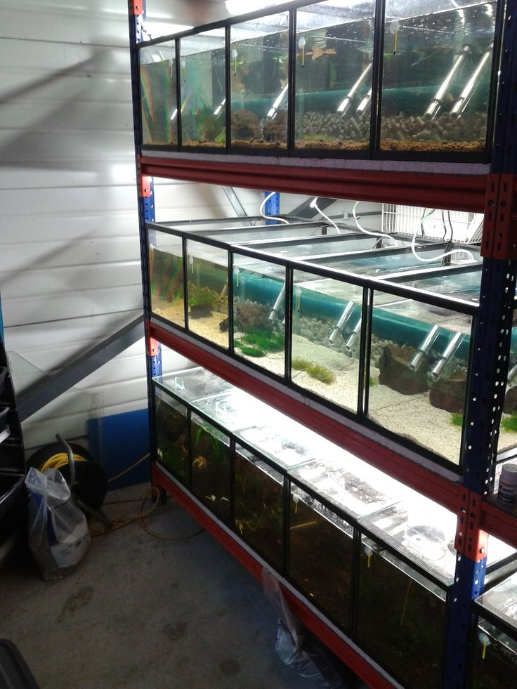 breeding rack shrimps pinterest aquariums fish