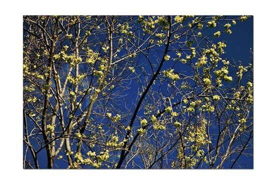 www.photobykashia.webnode.nl