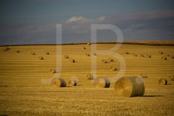 Country Bales Canvas Wall Art by CanvasingtheOutdoors on Etsy