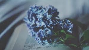 Image result for blue tumblr