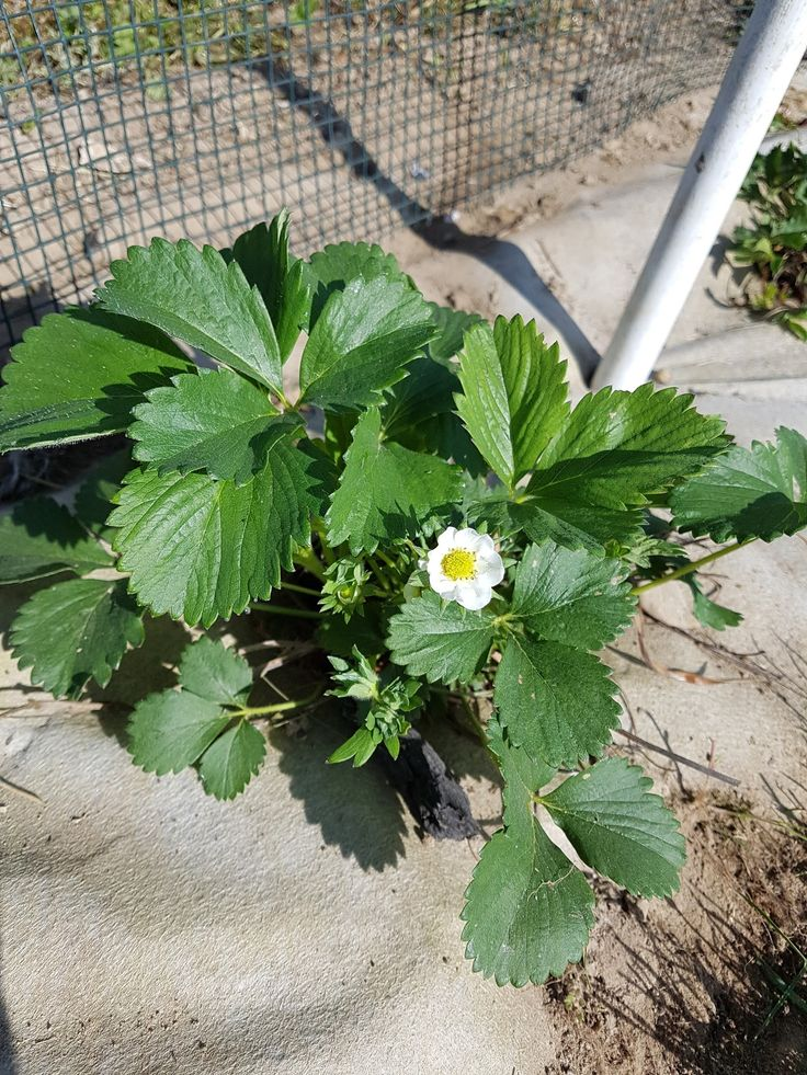 Les 87 meilleures images du tableau tout pour le potager sur pinterest du jardin fraises et - Tout pour le jardin ...