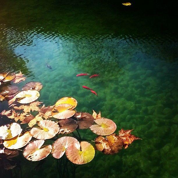 #Lombardia #igerlombardia #Brescia #parco #laghetto #pesciolini #rossi #sundaymorning #relax #shotonlumia #microsoftlumiaitalia by bettabasile