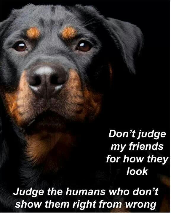 Rottweiler quote.