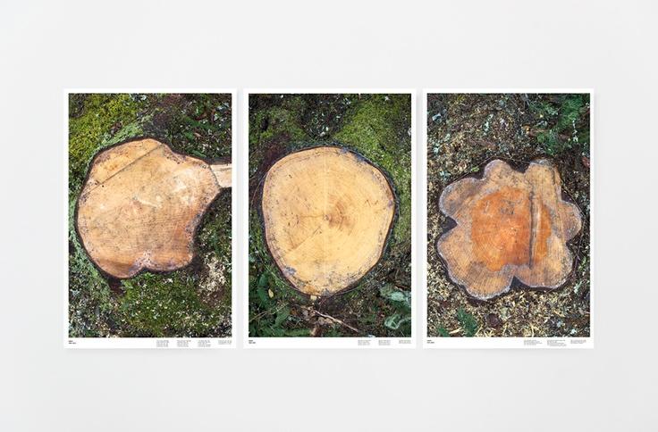 Trädens liv - Beatrice Almström