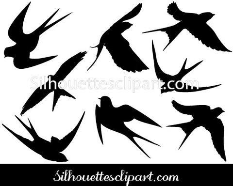 Swallow Vector Graphics
