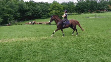 Salto de caballo elegante #animales #animados