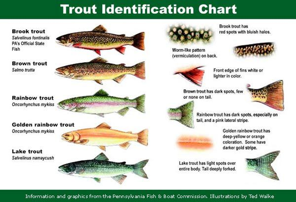 boat, lake trout | ... trout; here are a few trout fishing tricks that may help you can landa