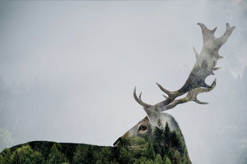 Antler Double-exposed by Angyalosi Bea