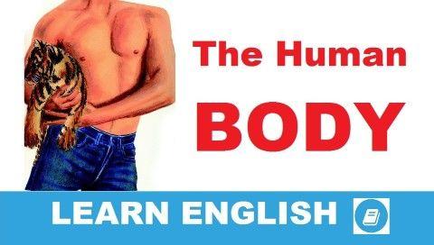 Angol szókincsfejlesztő témakörös lecke. Mai témánk az emberi test. Angol szavak és kifejezések: a belső szervek, a csontozat, a vérkeringés, légzés, reprodukciós szervek stb.
