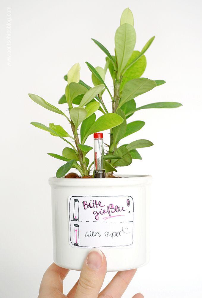 Die Hydrokultur – super einfache Form der Pflanzenpflege. Auch gut geeignet für Pflanzenfreunde mit weniger Grünem Daumen