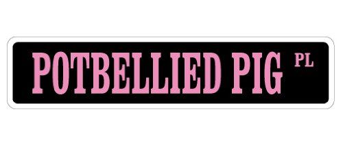 Best 25 Pot Belly Pigs Ideas On Pinterest Mini Pigs