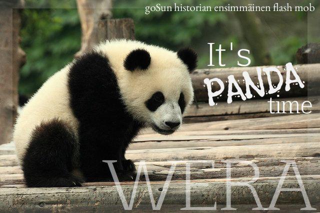 It's PANDA time!