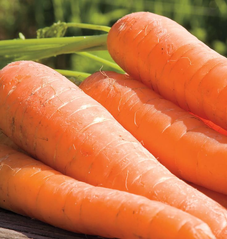 It is easy to learn How to Grow Carrots from Seed, just click on this like and we will show you how. So many Carrot seeds in all shapes, sizes and colours.