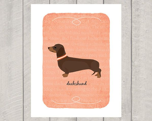 Chocolate Tan Dachshund Breed Custom Dog Art by HappyTailPrints
