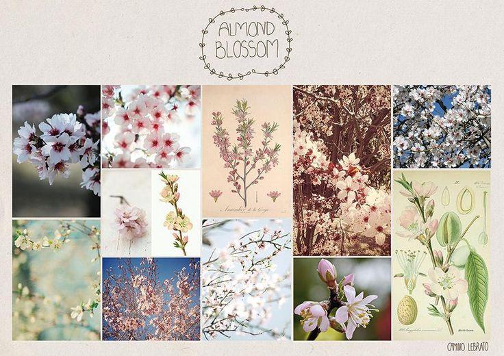 Moodboard of Almond Blossom by Nu Bkds - Skillshare