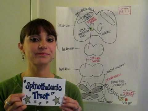 Spinothalamic Tract Song - YouTube