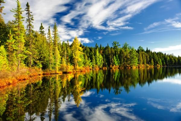 International Day of Forests - Friday March 21