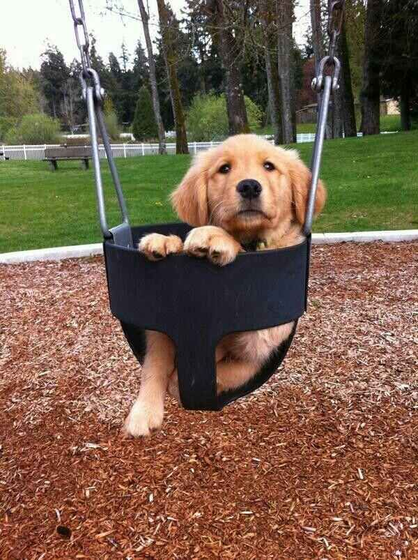 I am ready to be pushed.   61 Times Golden Retrievers Were So Adorable You Wanted To Cry