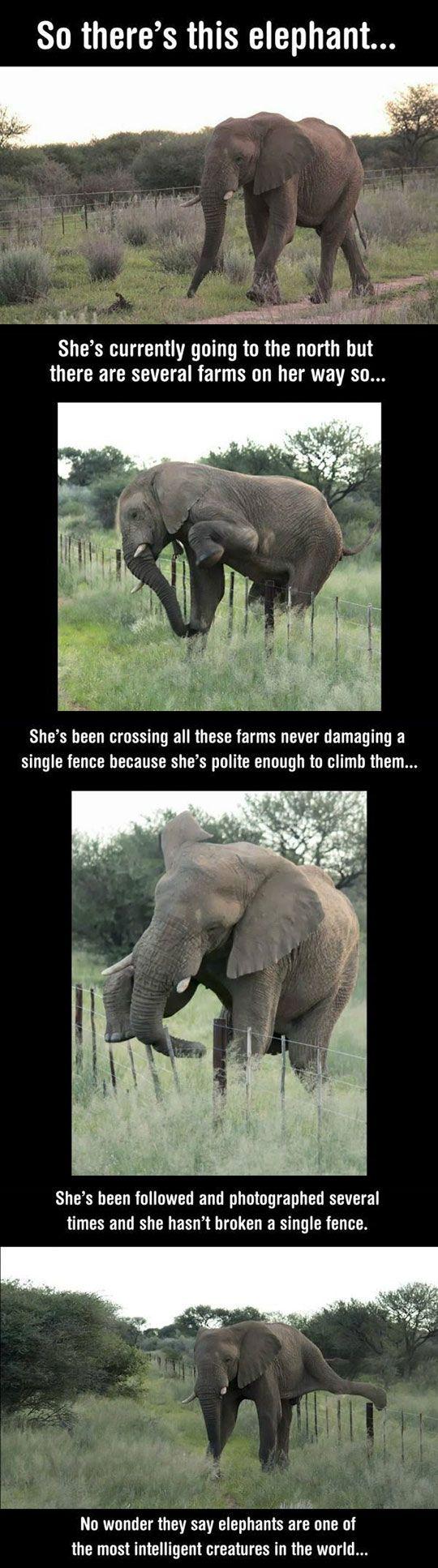 Good Guy Elephant
