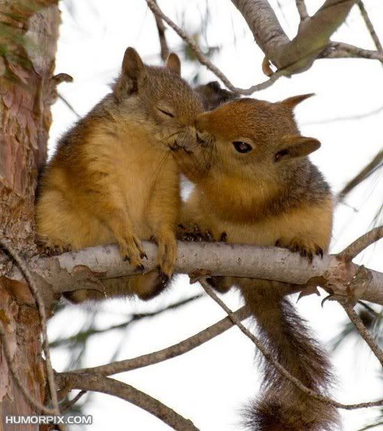 Squirrel love