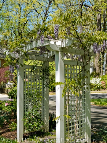 wisteria arbor- I would like a longer one for over the driveway entrance with white picket fence