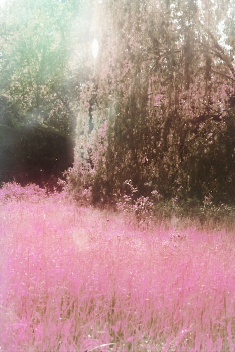 Bohemian Wornest... a beautiful pink field to run in, jump in, play in...