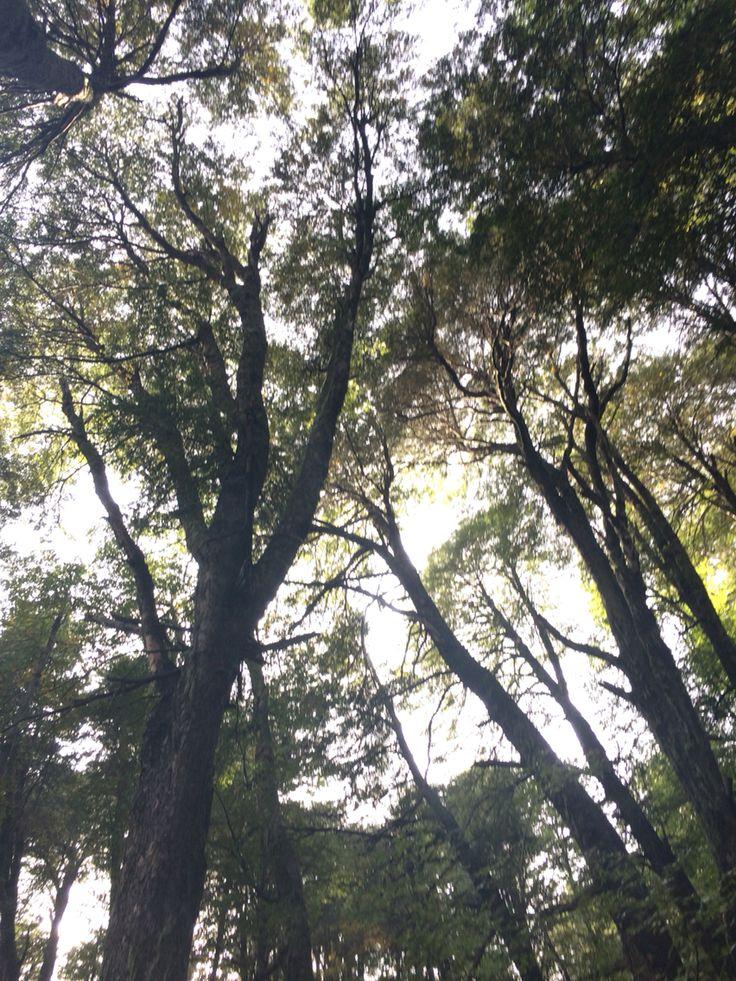 Valle Las Trancas, Chillan Chile #looktheforest