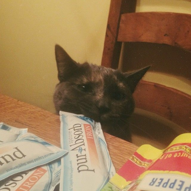 Kitties need iron, too? Everyone is loving Spatone pur-Absorb Iron as a vegan-friendly supplement. http://brinx.it/A0K