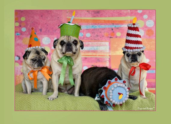 Party till you...drop... Wait Riley...you ok bud?? Just napping? Okay, thought so.  Party Till You Drop 5x7 Adorable Pug Birthday Card by Pugs and Kisses