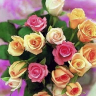 proflowers yellow roses