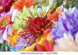 Image result for Flowers Mixed Color Background
