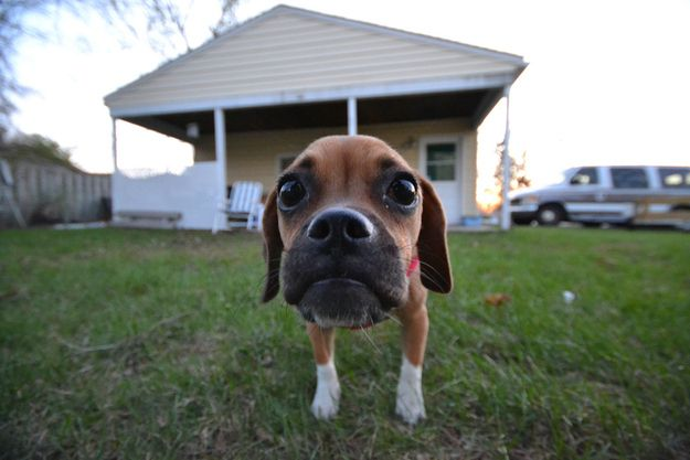 25 Animals Close-Up With A Wide-Angle