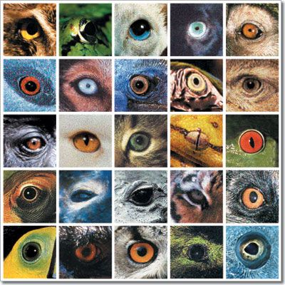 51 Best Images About Animal Eye Drawings On Pinterest
