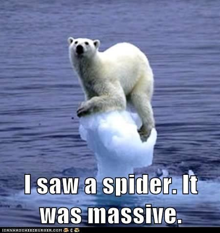 funny animal pictures with captions | funny-animal-captions-animal-capshunz-polar-bear-spider-is-it-gone