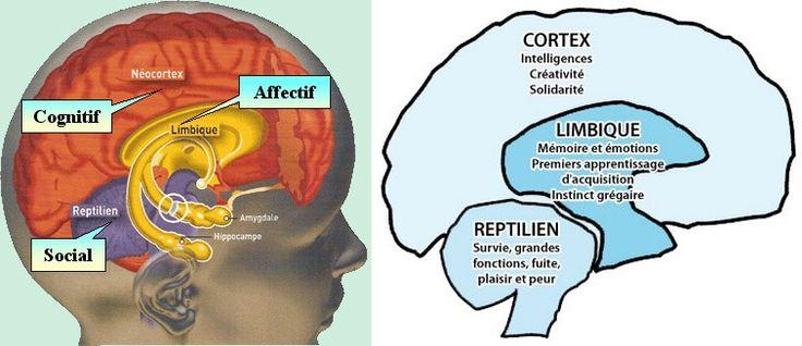 Les Neurosciences au service de l'éducation bienveillante