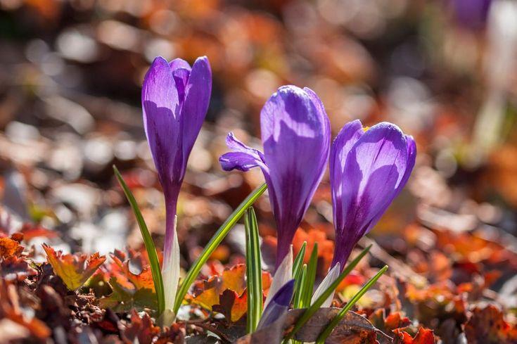 Spring in Air - Kevättä ilmassa by Pauliina Kuikka and Arto Lehikoinen Photography