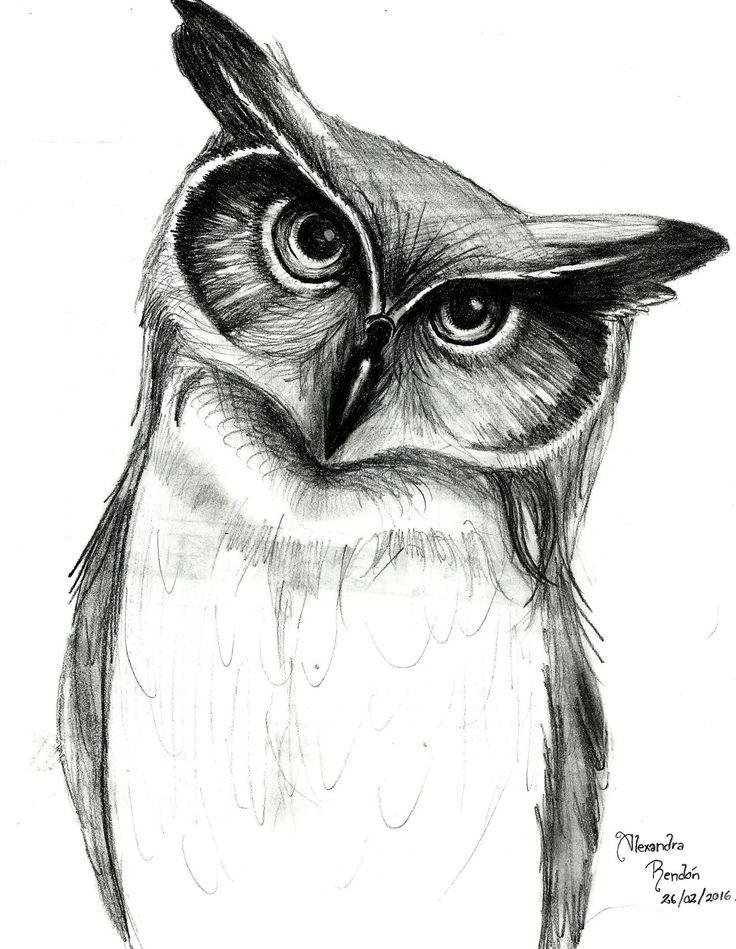 dibujo de Búho a lápiz