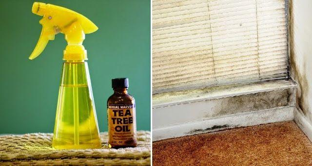 como matar el moho de tu hogar de manera natural