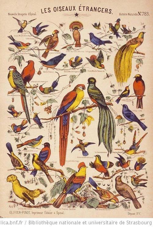 Images d'Epinal: papillons, oiseaux, animaux, jeu, vie...