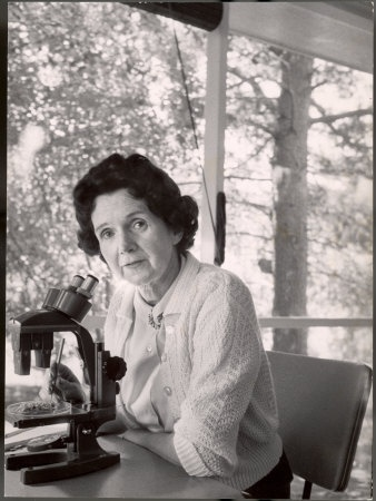 """Rachel Carson- """"The more clearly we can focus our attention on the wonders and realities of the universe about us, the less taste we shall have for destruction."""""""