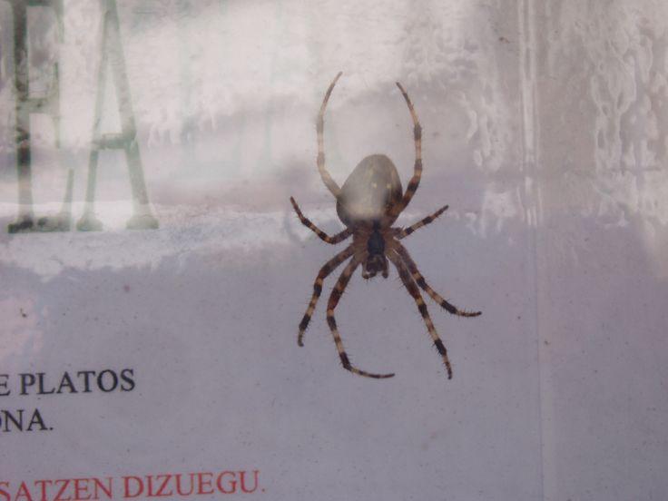Una hermosa araña