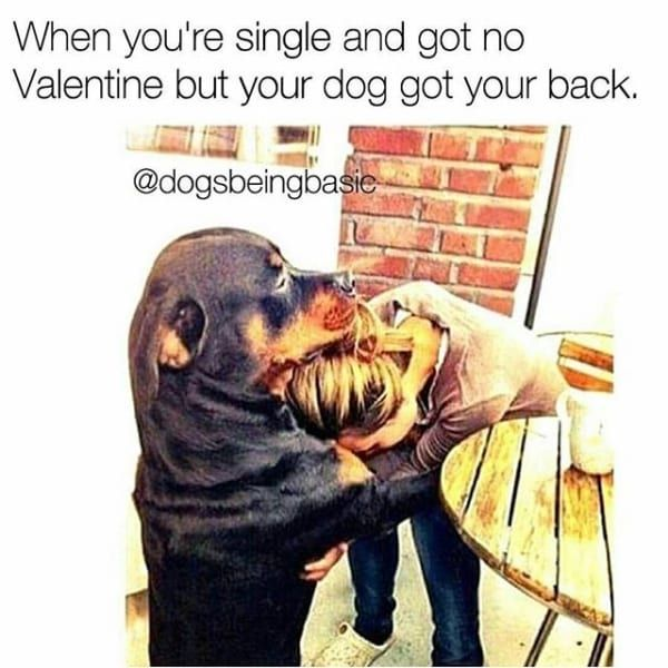 Dog Comforts On Valentines Day Dog Memes Funny Dog Pictures Funny Animal Memes