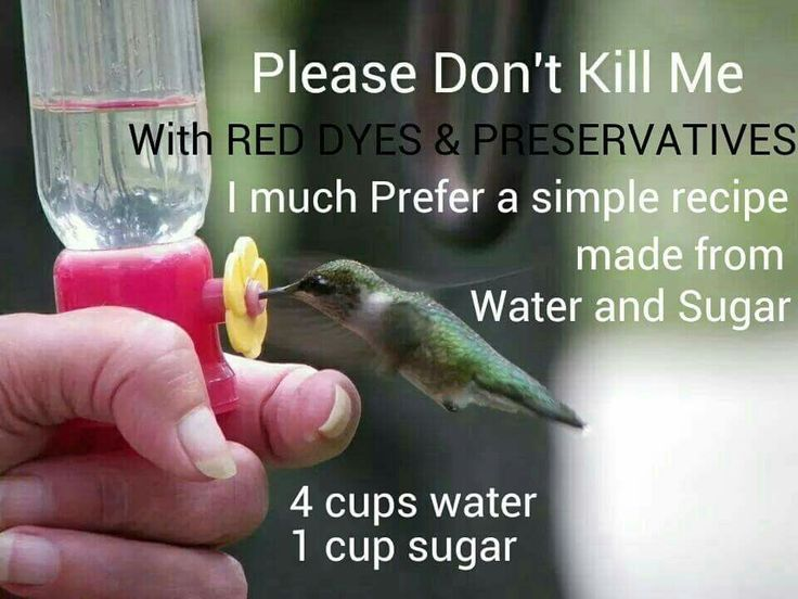 ~Hummingbird food~ 4 cups water 1 cup sugar. Bring water to a boil, add sugar and stir until dissolved. Allow to cool. Once cooled fill feeder.