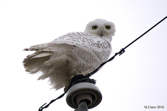 Wild Birds Unlimited | Birds from Around Town | Buckingham (Bucks County), PA