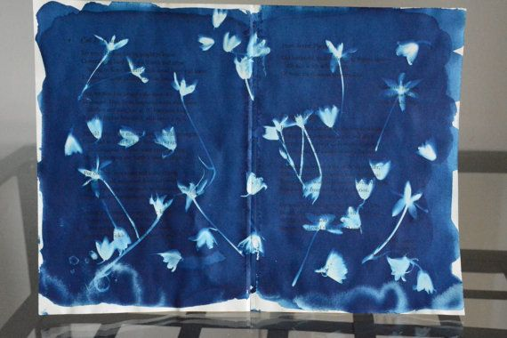 Original cyanotype photogram created using actual flowers on antique book pages. Youthful Funeral Hymn, cyanotype on paper, 12x8, 2014. Book pages used in this piece contains the poetry from the Latin, Horace, Call To Youth, from the Japanese, Maisuo Bash, From Seven Poems, as well