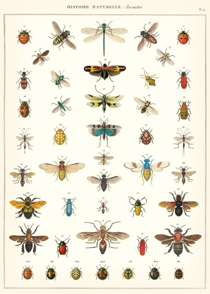 Natural history of insects print #botanical