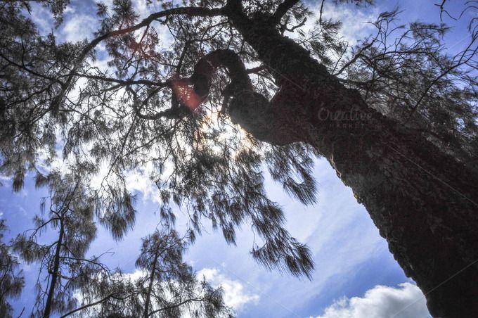 Arcopodo tree by Yandauga on @creativemarket